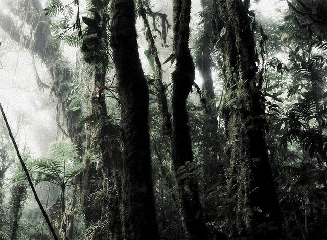 dešťový prales