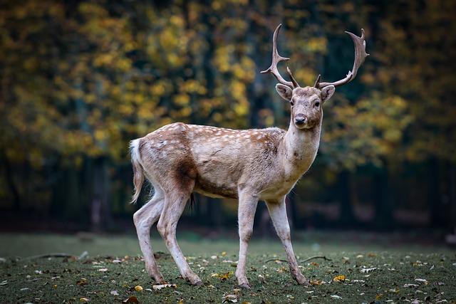 jelen v přírodě