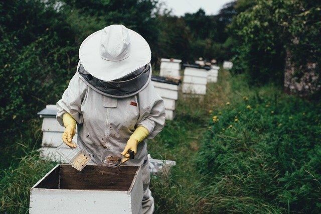 včelár.jpg