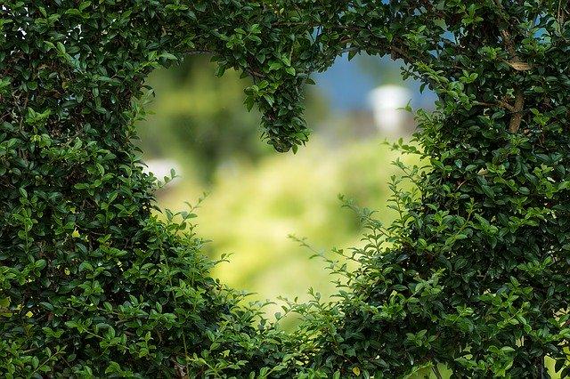 srdce v kroví.jpg